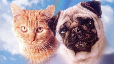 The Difference Between (Dead) Cats and Dogs in Film