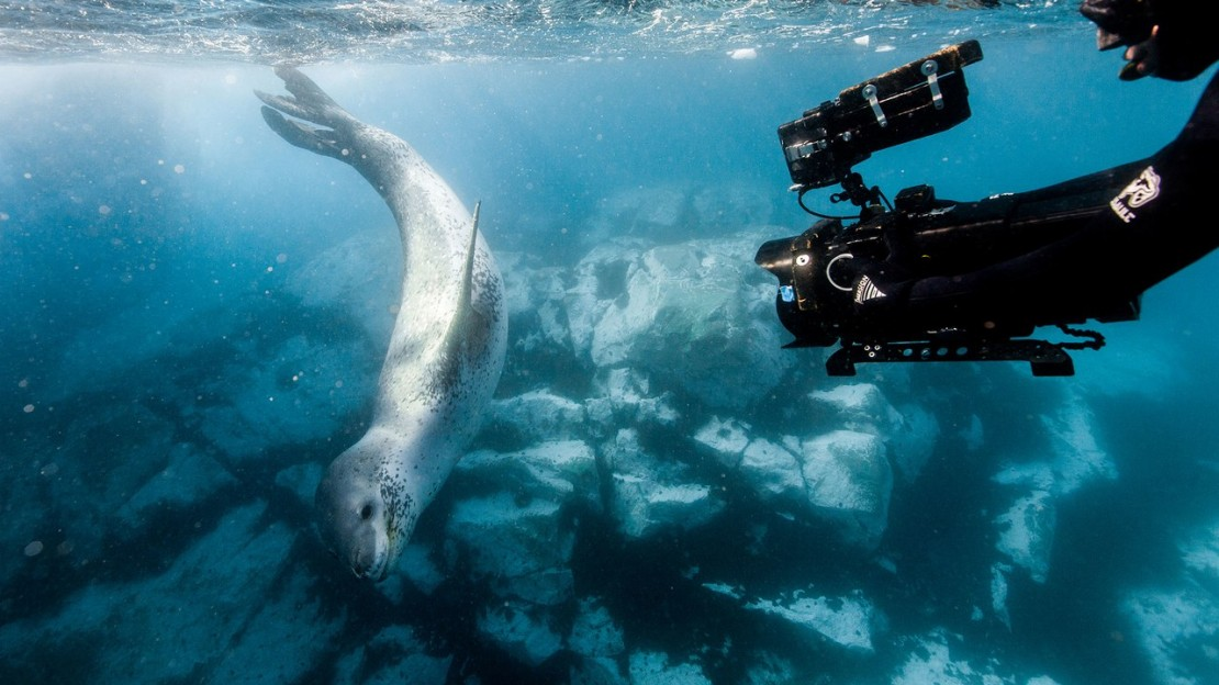 Sharks, Drones, and Nauticams: What It's Like to Shoot