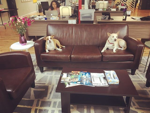 Dogs_Production Office