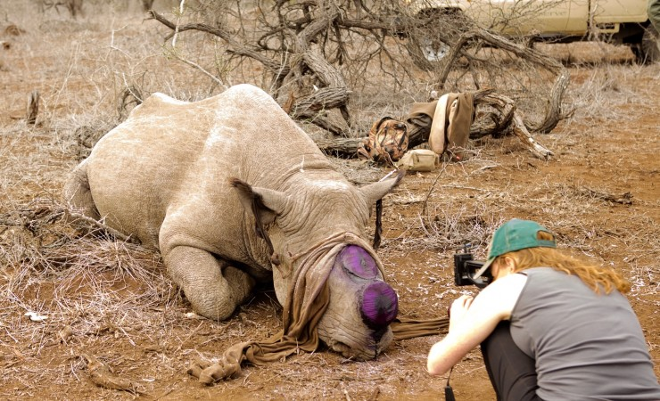 Arianna Lapenne with National Geographic Explorer, investigating the debate over whether to legalize the harvesting of re-growable rhino horn in South Africa at Hluhluwe-Umfolozi Park.