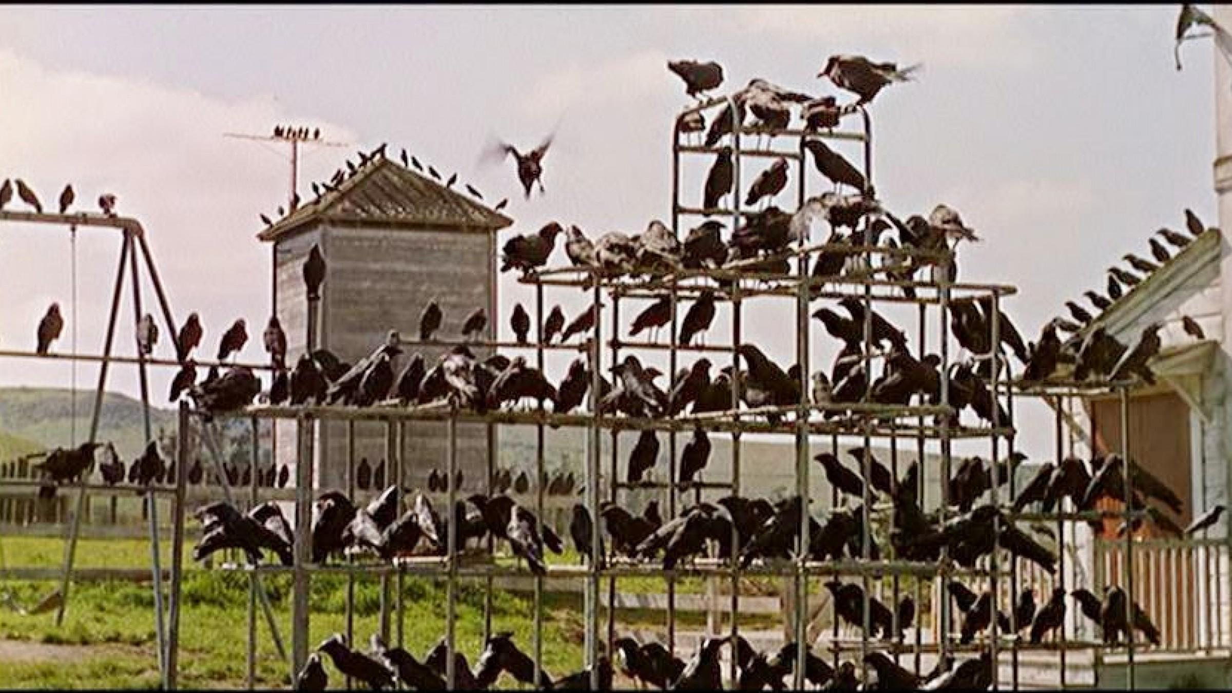 Watch: The Reason Why Alfred Hitchcock Incorporated Birds Throughout His Movies