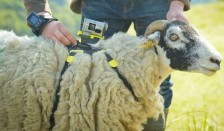 Sony Sheep Action Cam Tour de France